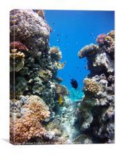 Between the reefs, Canvas Print