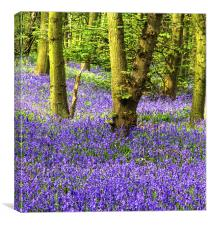 If you go down to the Woods, Canvas Print