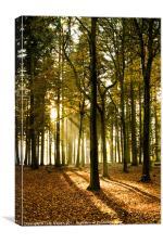 Autumn Silhouettes I, Canvas Print