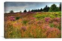 Otley Chevin Heathland, Canvas Print