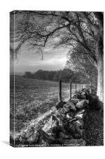 Chevin Dry Stone Wall #2 Mono, Canvas Print