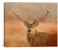Red Deer Stag , Canvas Print