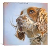 English Springer Spaniel , Canvas Print