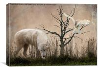 Woodland Wolf, Canvas Print