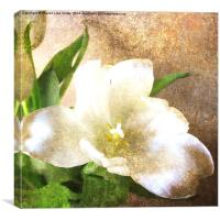 Tulips and rust, Canvas Print