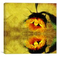 (Sunflower)- A Reflection of a Summer Day 2, Canvas Print