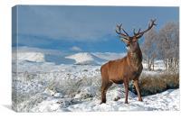 Deer Stag, Glencoe, Canvas Print
