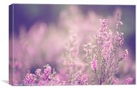 Dreamy Pink Heather, Canvas Print