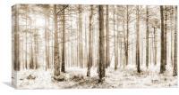 Sunlit Hazy Trees in Neutral Colours, Canvas Print