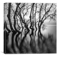 submerging trees, Canvas Print