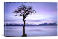 Millarochy Bay Tree Loch Lomond, Canvas Print
