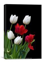 Spring Tulips, Canvas Print