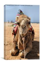MOROCCAN CAMEL, Canvas Print