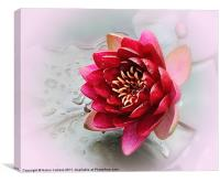 RED WATER LILY, Canvas Print