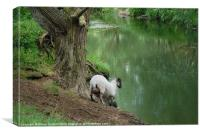 SHEEP GOES FOR A DRINK, Canvas Print