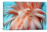 FLAMINGO FEATHERS, Canvas Print