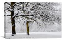 SNOWY TREES, Canvas Print