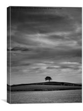 LONESOME TREE                                    , Canvas Print