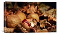 Autumn colours, leaves and conkers, Canvas Print
