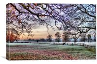 Frosty Morning, Canvas Print