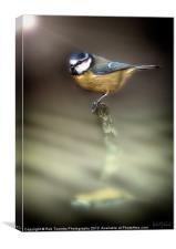EARLY BIRD, Canvas Print