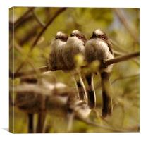 Long tailed tits, Canvas Print
