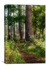 Forest Track, Canvas Print