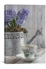 Hyacinth Teatime, Canvas Print