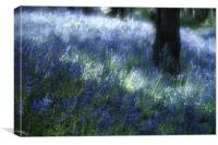 Softly Through The Bluebells, Canvas Print