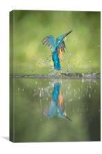 Male Kingfisher, Canvas Print