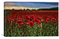 Field of Remembrance, Canvas Print