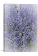 Bursting Blues of Springtime, Canvas Print