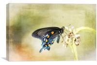 Swallowtail, Canvas Print