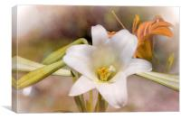 Two Lilies, Canvas Print