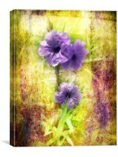Flowering Mexican Petunias 2, Canvas Print