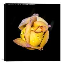Rosebud and Dew, Canvas Print