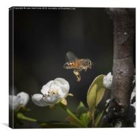 Busy as a Bee, Canvas Print