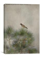 Hawk in the Treetop, Canvas Print