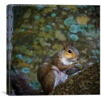 Eastern Gray Squirrel, Canvas Print