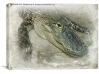 Real Live Gator, Canvas Print