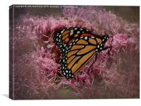 Orange Monarch, Canvas Print
