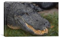 Gator Face, Canvas Print