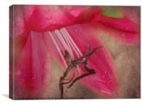 Dew Kissed Lily, Canvas Print