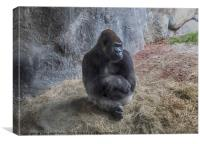 Gorilla Pose, Canvas Print