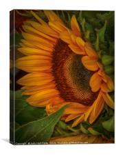 Sunflower Beauty, Canvas Print