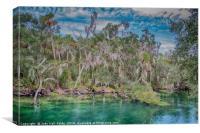 Tropical Colors, Canvas Print