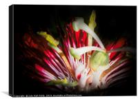 Red Passion, Canvas Print