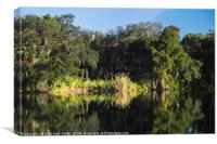 Reflections on the Caloosahatchee River, Canvas Print