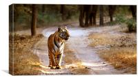 Tiger on Track, Canvas Print