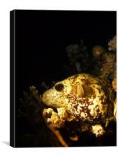 sleeping blowfish, Canvas Print